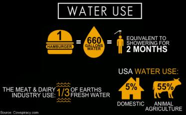 water-use-hamburger-water-shower